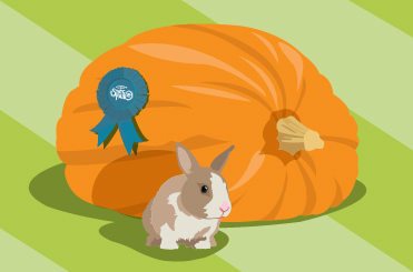 An illustration of a large pumpkin with a blue ribbon attached and a rabbit in front of the pumpkin.