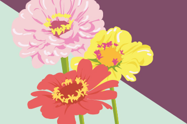 An illustration of three mum flowers close up in pink, yellow, and red.