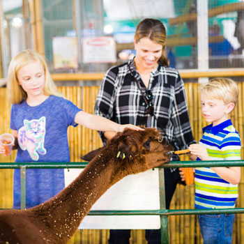 A mother and two children petting a brown llama in an animal show building.